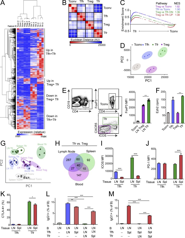 FoxP3 And Ezh2 Regulate Tfr Cell Suppressive Function And Transcriptional Program