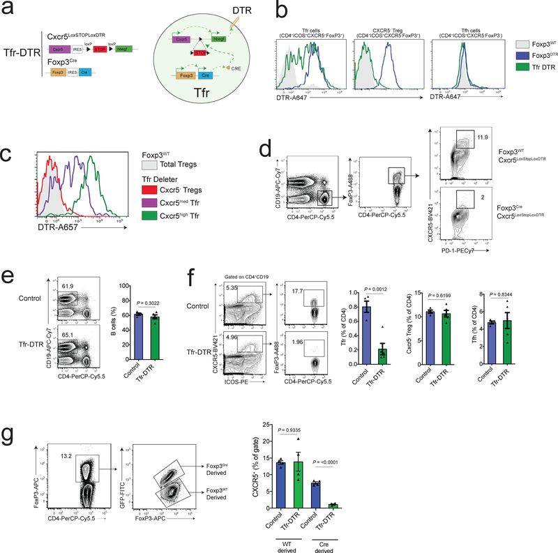 Follicular Regulatory T Cells Control Humoral And Allergic Immunity By Restraining Early B Cell Responses